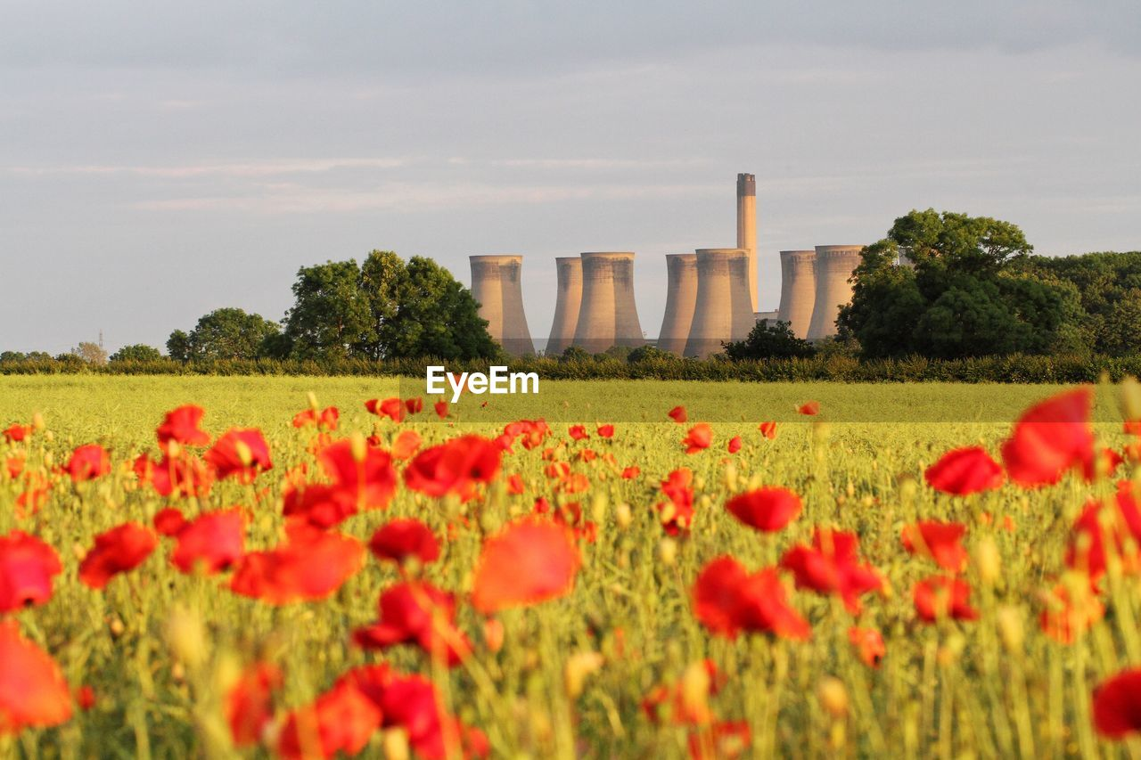 Poppy field in bloom with cooling towers of thermal power plant in background