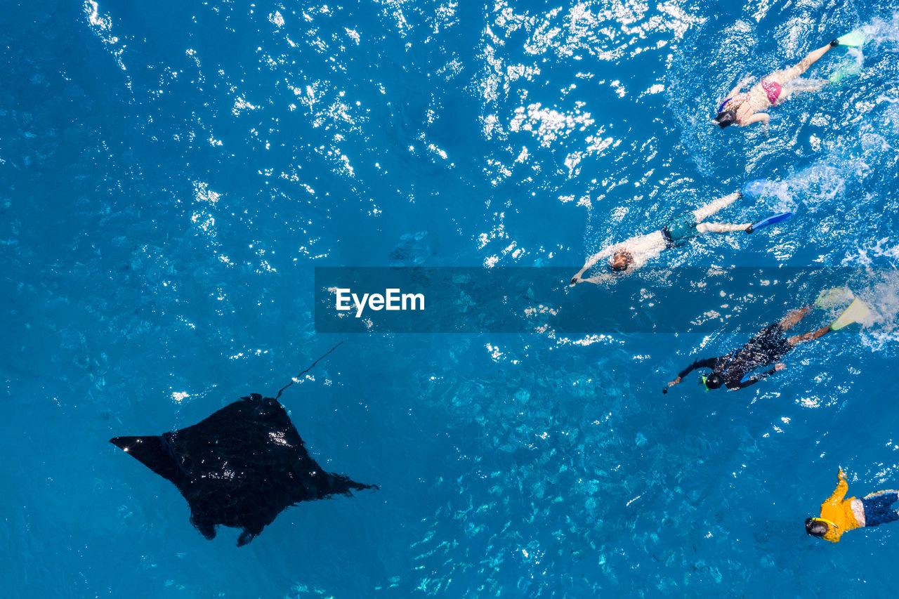 High angle vie of manta ray and people swimming in sea