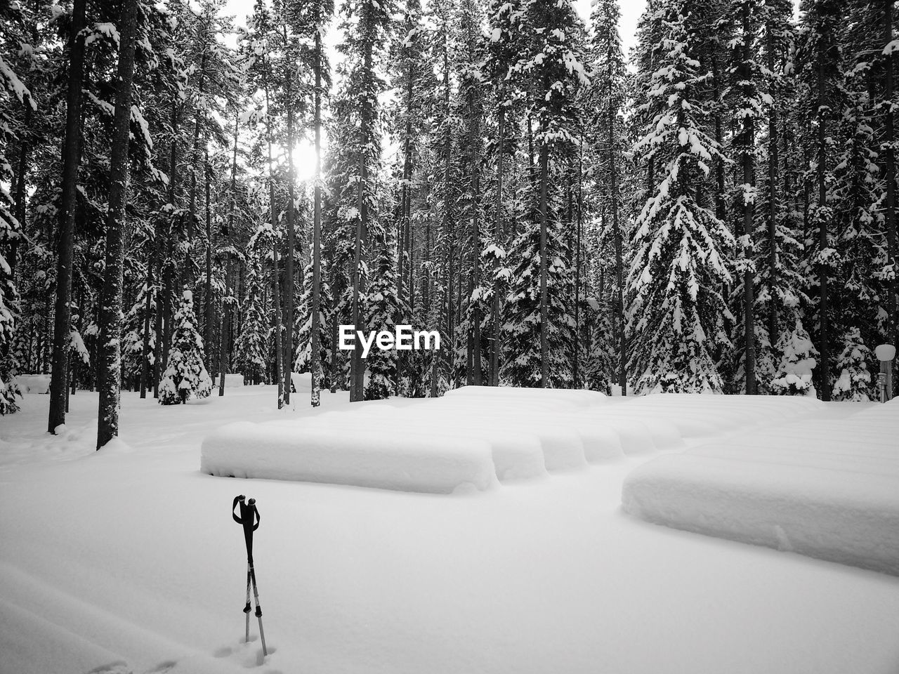 Ski Poles In Snow With Trees In Background