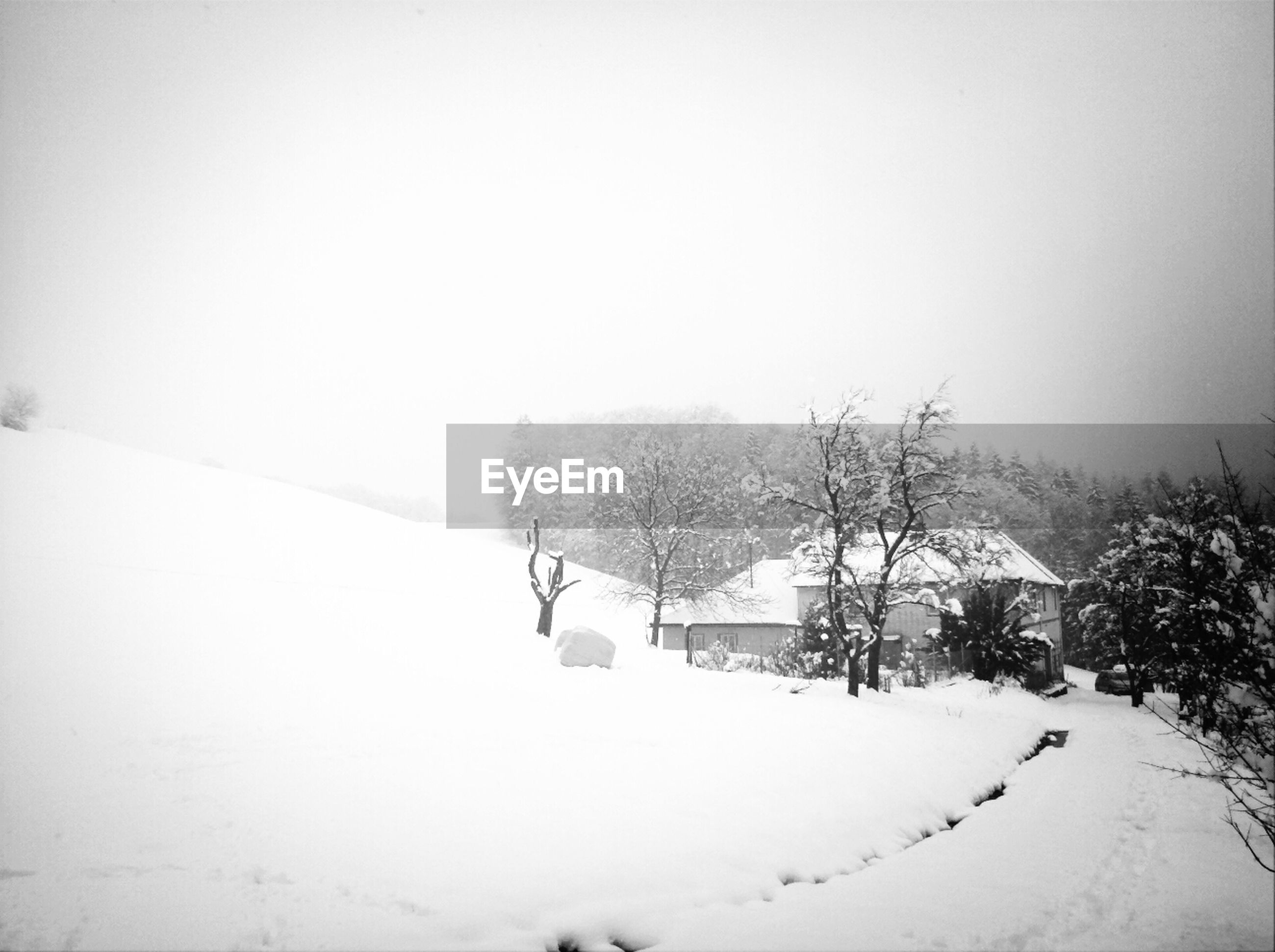 snow, winter, cold temperature, season, weather, covering, tree, clear sky, landscape, bare tree, copy space, frozen, white color, snow covered, field, nature, snowcapped, tranquil scene