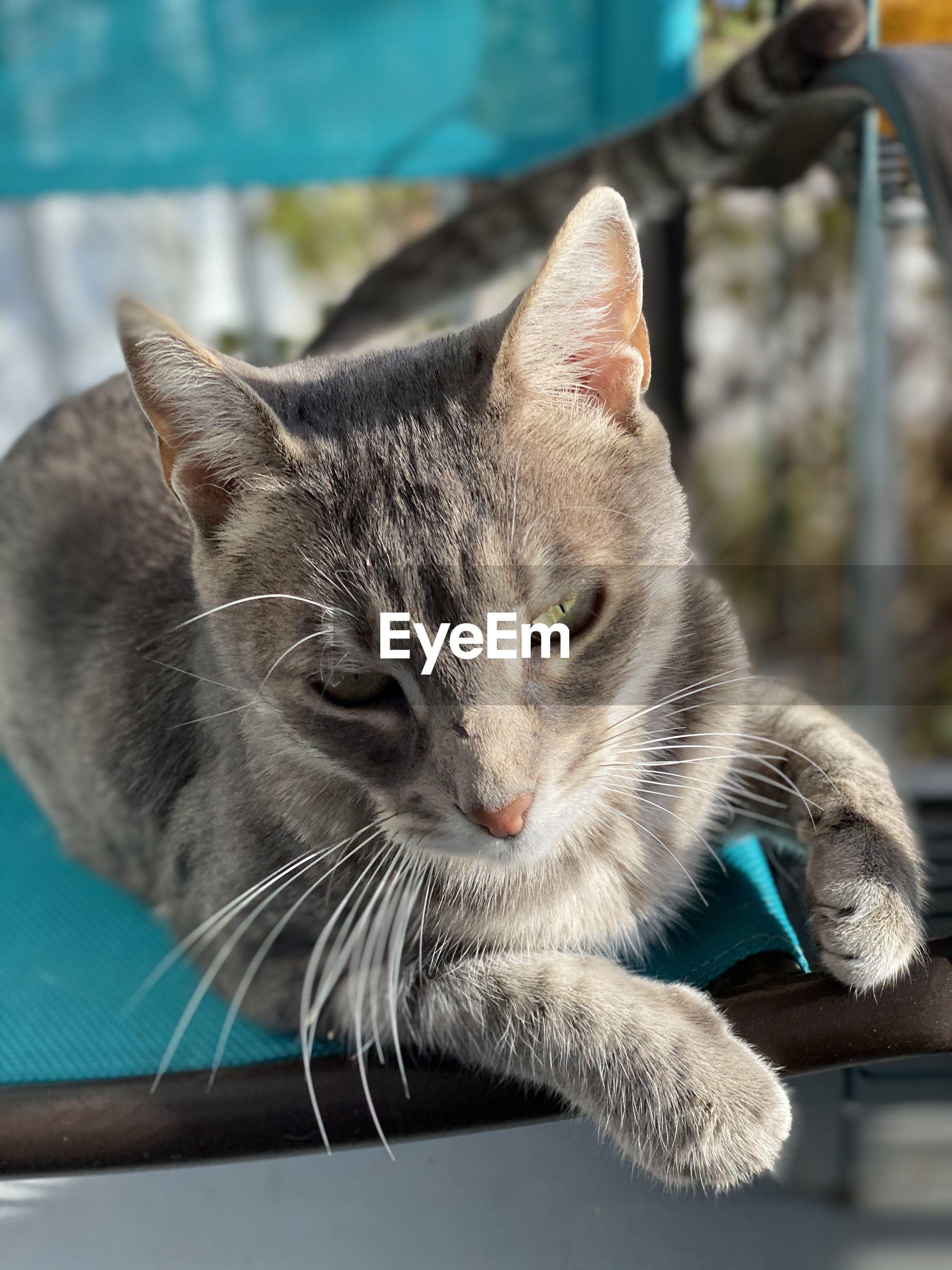 Close-up portrait of a cat paws