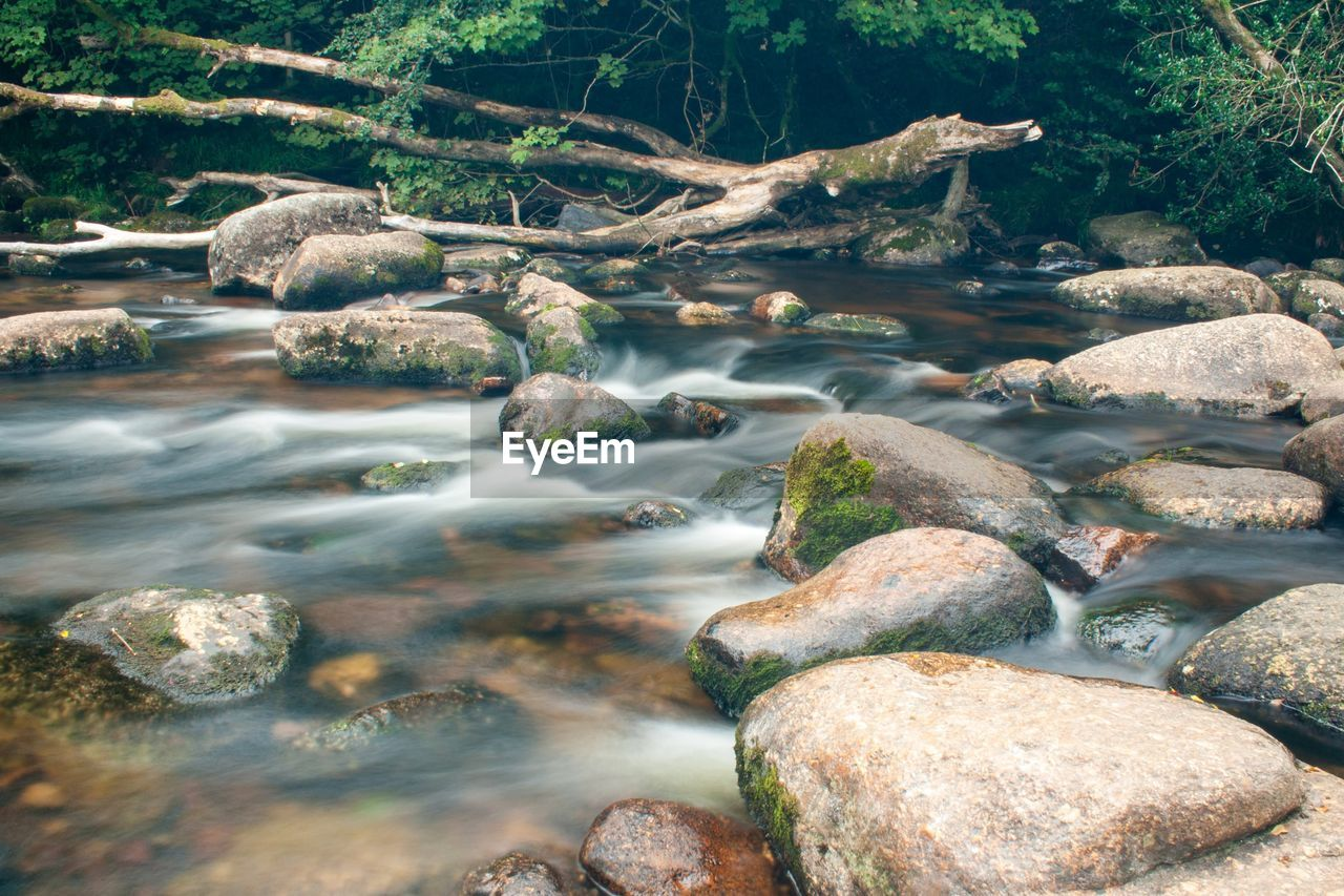 water, rock, rock - object, solid, river, beauty in nature, nature, day, flowing water, tree, no people, tranquility, long exposure, scenics - nature, forest, motion, flowing, stone, land, stream - flowing water, outdoors, pebble, shallow, purity