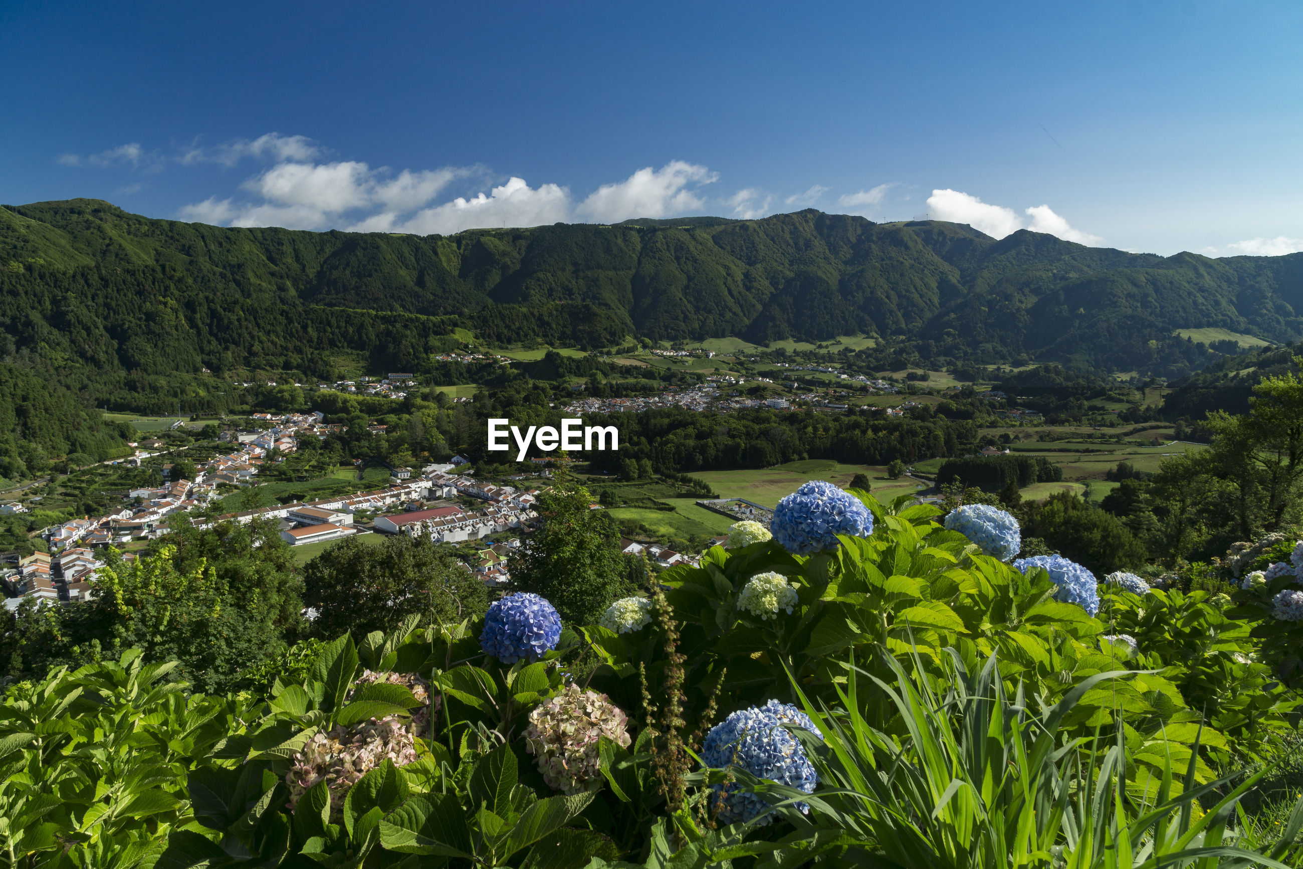 SCENIC VIEW OF FLOWERING PLANTS AGAINST SKY