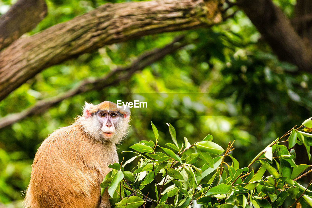 animal, animal themes, one animal, animal wildlife, animals in the wild, plant, primate, mammal, tree, focus on foreground, vertebrate, plant part, monkey, leaf, nature, branch, green color, day, no people, portrait, outdoors