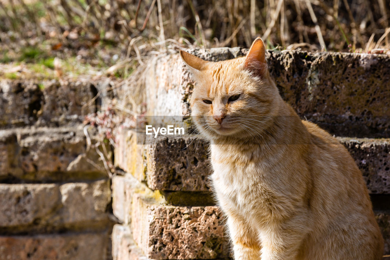 mammal, animal, animal themes, feline, cat, one animal, domestic animals, pets, vertebrate, domestic, day, focus on foreground, no people, domestic cat, looking, portrait, looking away, nature, outdoors, whisker