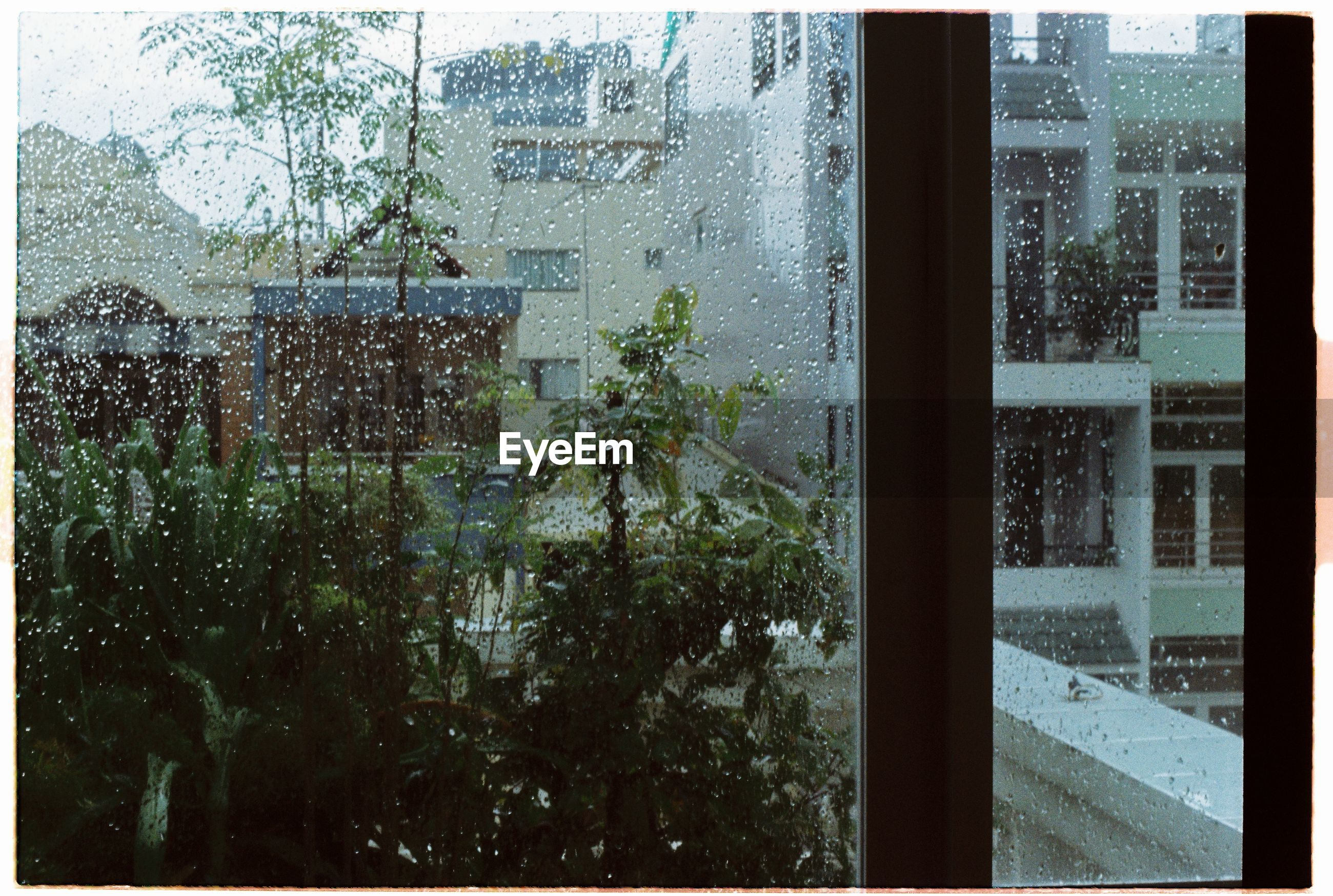 window, glass - material, transparent, wet, rain, looking through window, weather, rainy season, day, indoors, drop, raindrop, water, glass, tree, backgrounds, full frame, sky, no people, close-up, nature, window washer, frosted glass, architecture
