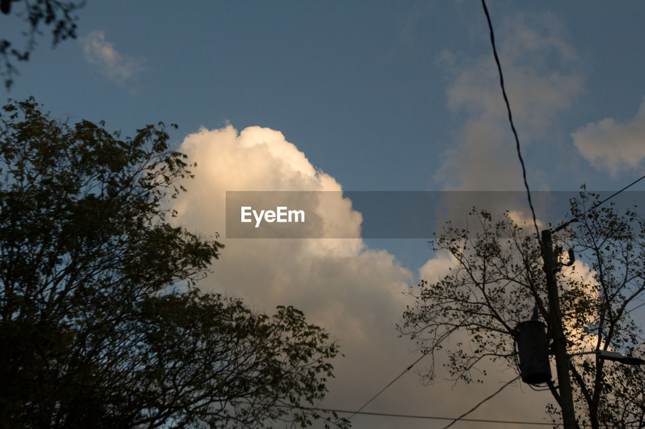 low angle view, tree, sky, nature, cable, cloud - sky, silhouette, outdoors, beauty in nature, day, power supply, no people, electricity, branch, electricity pylon, scenics, animal themes, telephone line