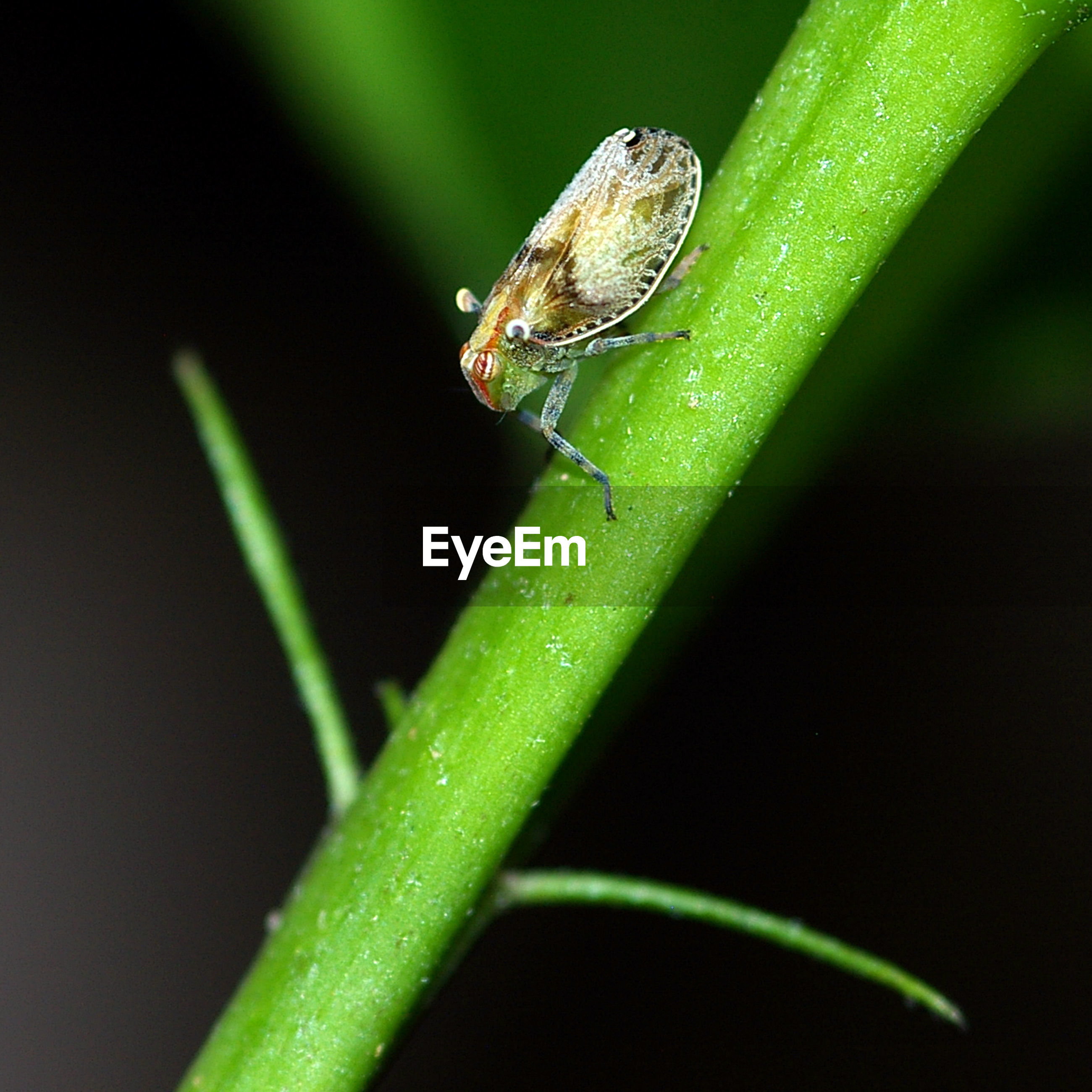 Close-up of insect on stem