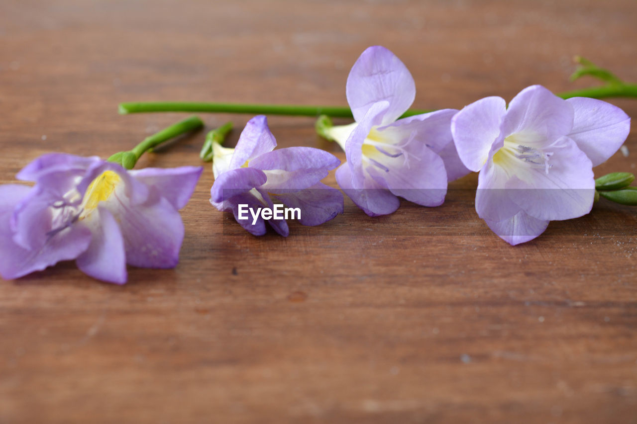 Close-up of purple flowers on table