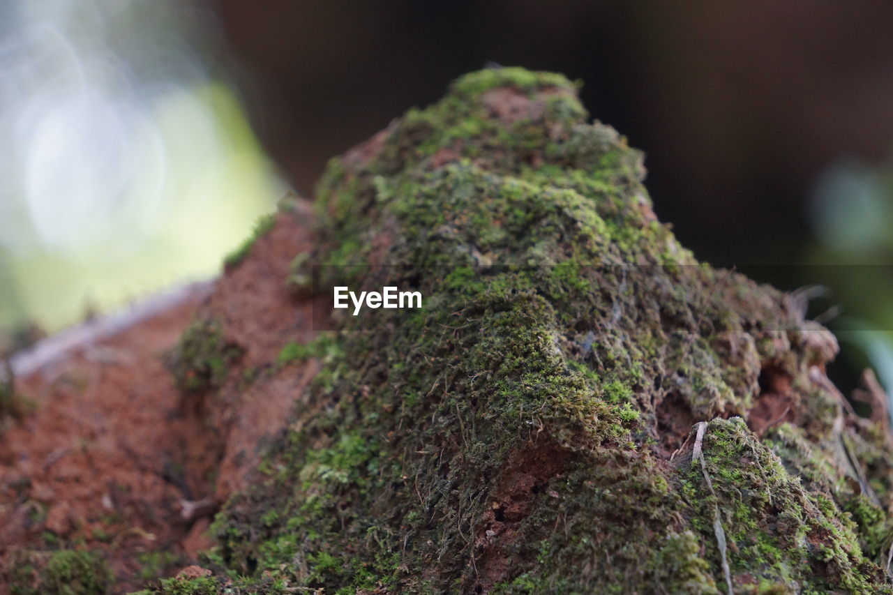 focus on foreground, moss, nature, no people, close-up, day, outdoors, rough, tree