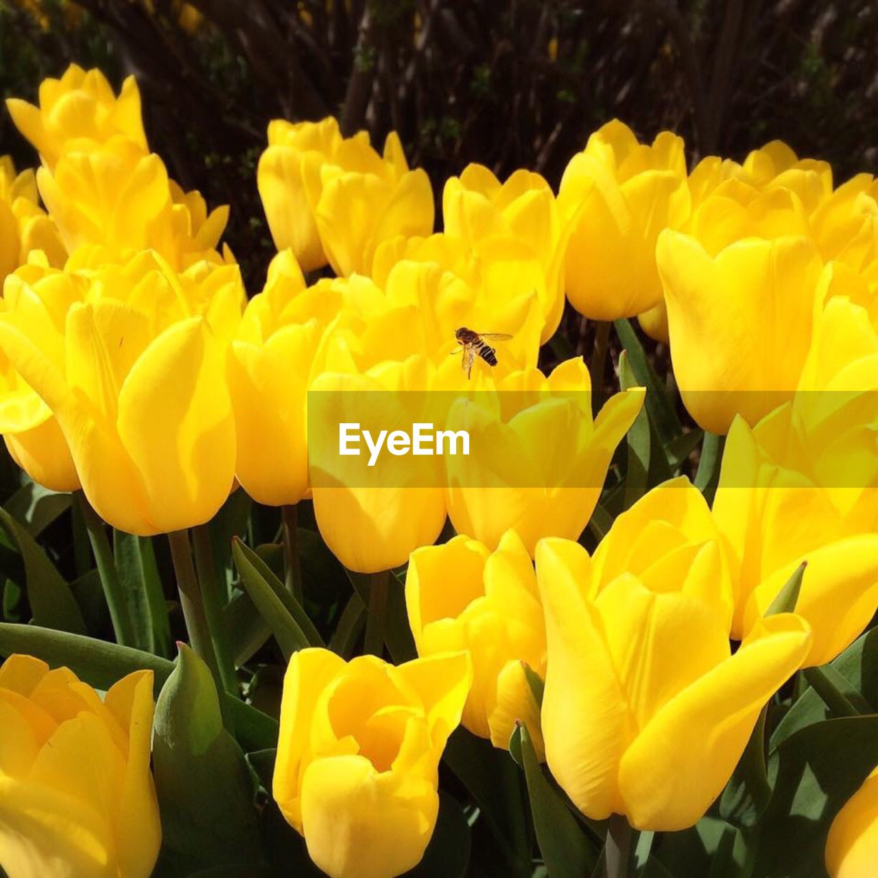 flower, yellow, petal, fragility, nature, beauty in nature, growth, freshness, plant, flower head, outdoors, blooming, no people, day, close-up
