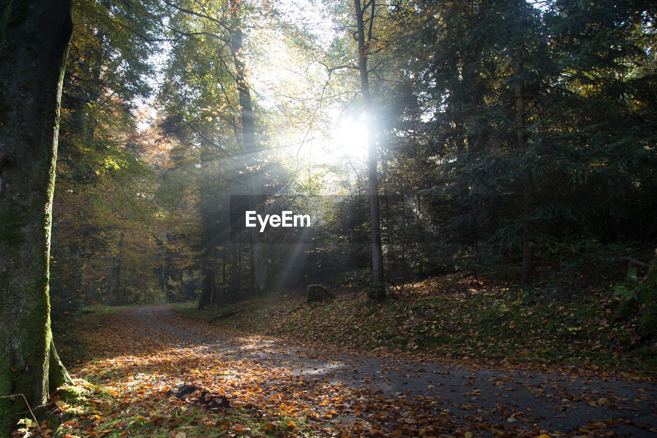 tree, forest, sunbeam, plant, land, sunlight, nature, tranquility, the way forward, lens flare, direction, sun, no people, autumn, day, tranquil scene, footpath, beauty in nature, growth, woodland, outdoors, change, streaming, bright
