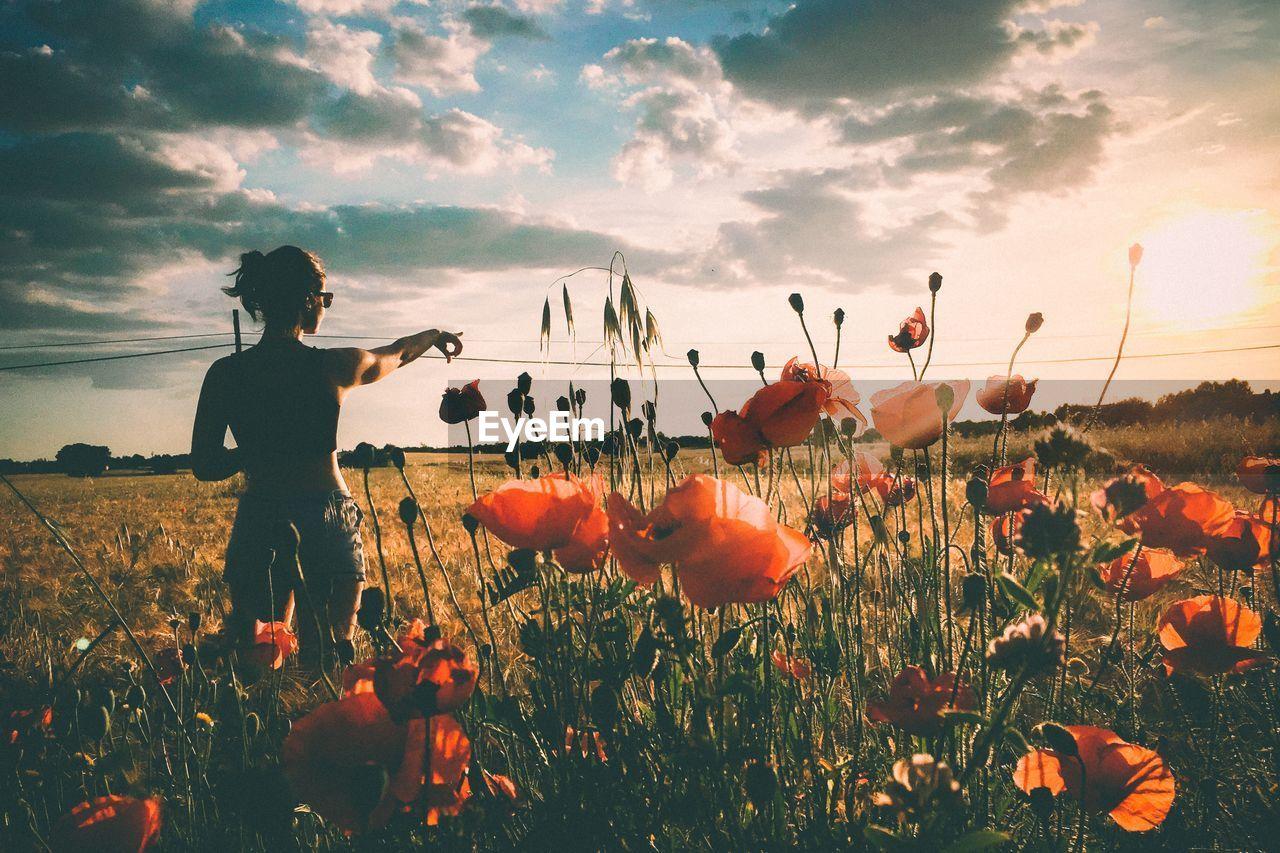 Rear View Of Woman Standing In Poppy Field