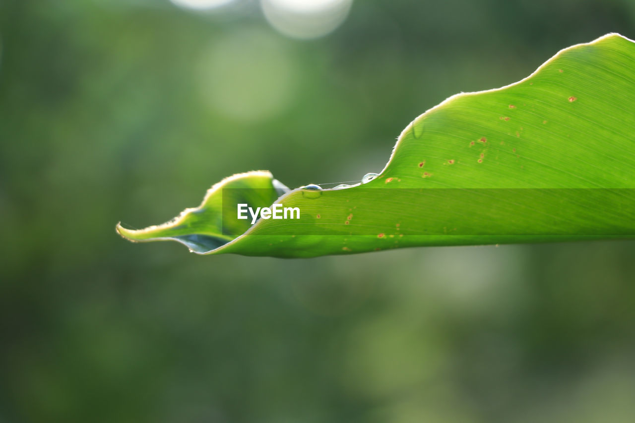 green color, growth, plant, close-up, focus on foreground, beauty in nature, no people, day, nature, plant part, leaf, freshness, outdoors, drop, beginnings, selective focus, vulnerability, fragility, tranquility, plant stem, raindrop