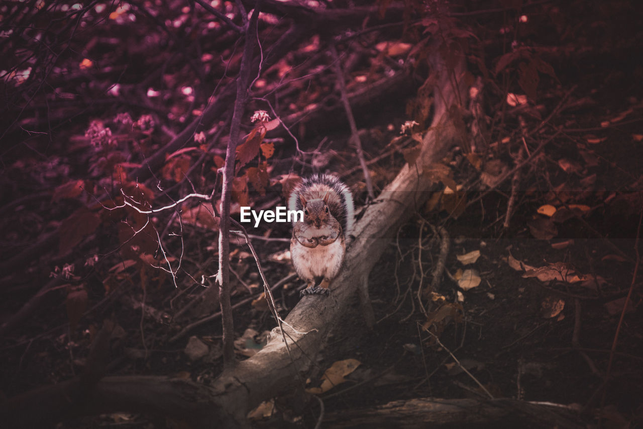 land, one animal, tree, animal themes, plant, no people, nature, animal, forest, day, animal wildlife, mammal, high angle view, animals in the wild, field, outdoors, branch, selective focus, vertebrate, looking at camera, animal head