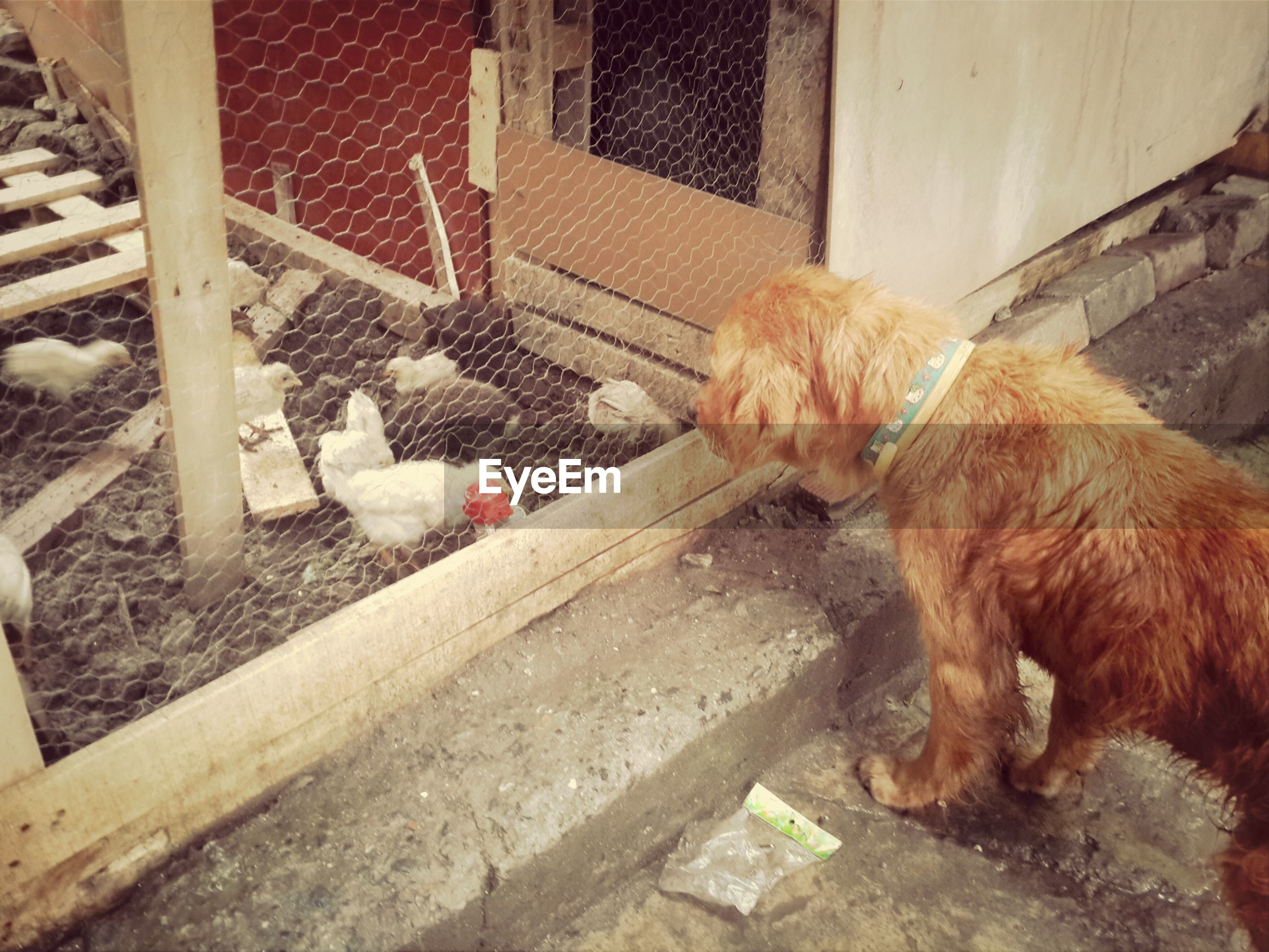 domestic animals, mammal, pets, animal themes, dog, one animal, relaxation, full length, sitting, sleeping, domestic cat, lying down, resting, togetherness, steps, built structure, high angle view, cute, eyes closed, cat