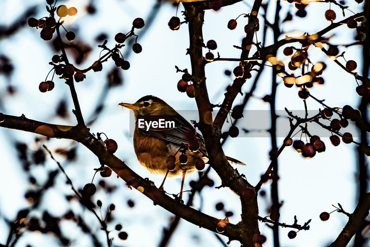 bird, animal themes, animal, vertebrate, animal wildlife, tree, perching, one animal, branch, animals in the wild, plant, focus on foreground, no people, nature, day, selective focus, outdoors, beauty in nature, sparrow, close-up