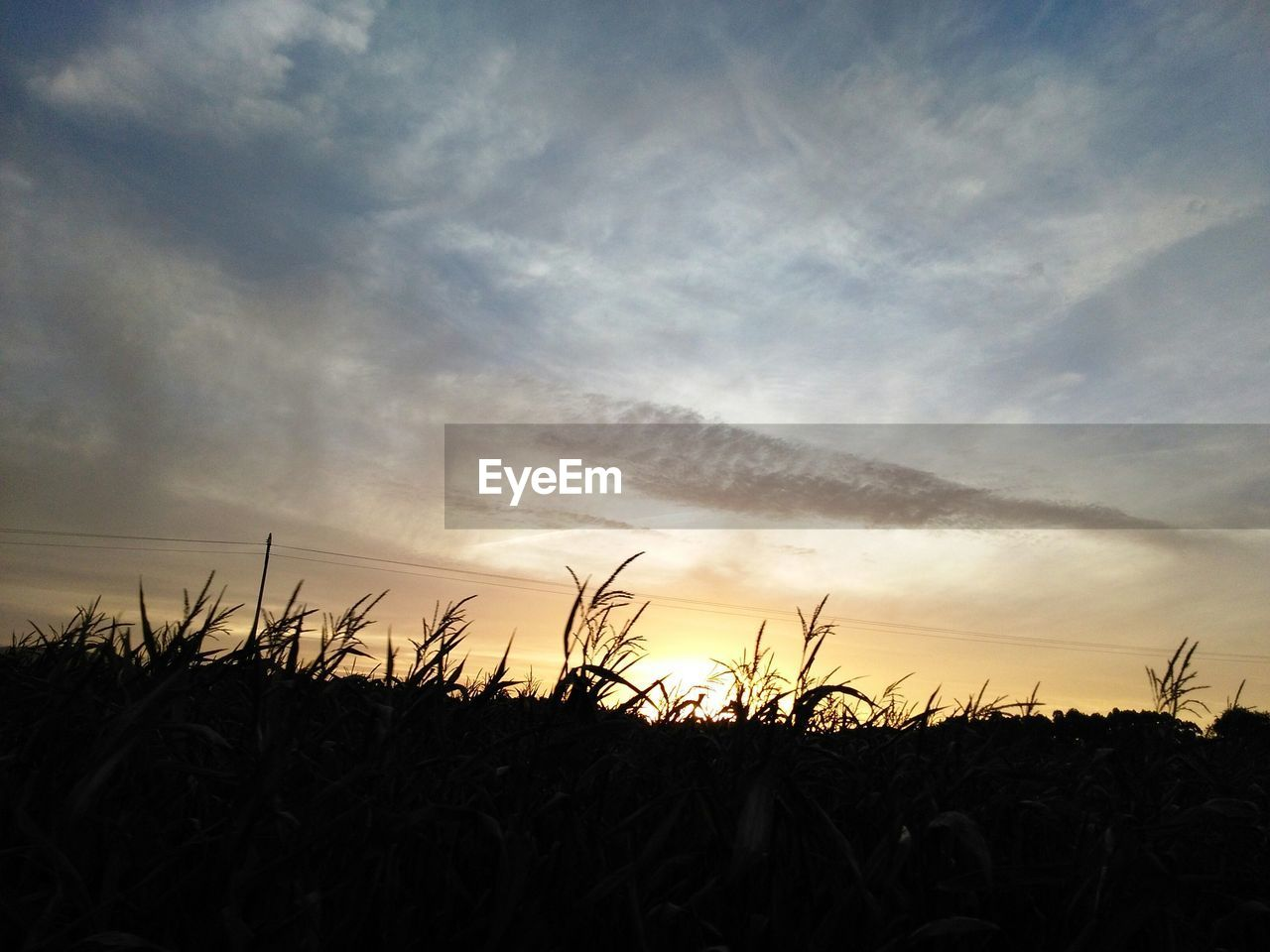 sunset, sky, silhouette, nature, scenics, tranquil scene, cloud - sky, tranquility, field, beauty in nature, no people, landscape, outdoors, growth, plant, rural scene, grass, day, close-up