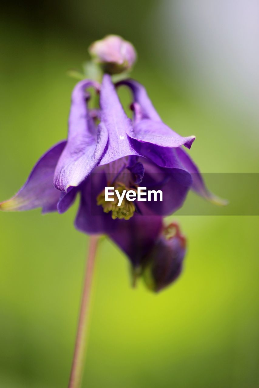 flower, purple, petal, fragility, beauty in nature, nature, growth, no people, plant, close-up, flower head, freshness, outdoors, day