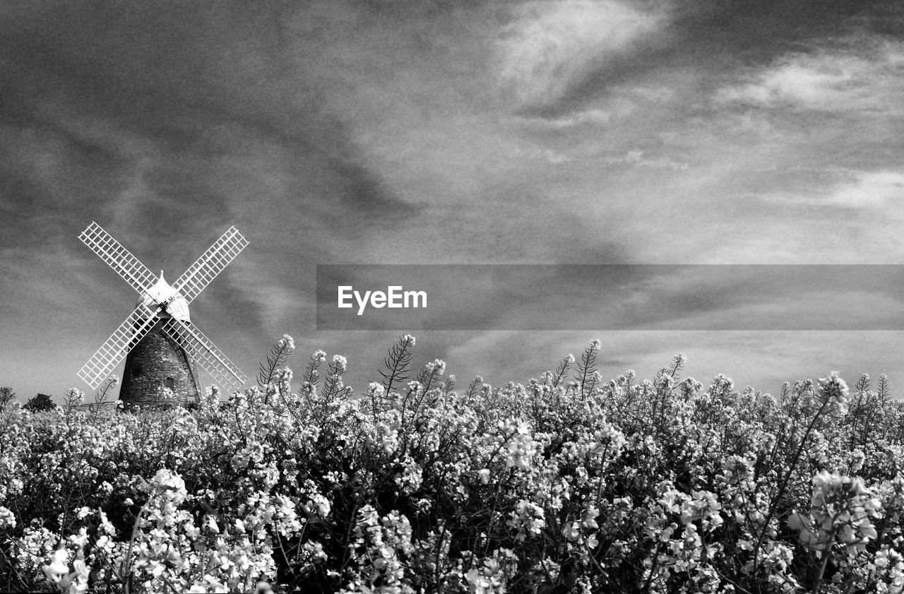 environmental conservation, alternative energy, windmill, wind power, sky, wind turbine, renewable energy, no people, cloud - sky, nature, day, outdoors, field, rural scene, traditional windmill, tree, plant, growth, industrial windmill, technology, building exterior, architecture