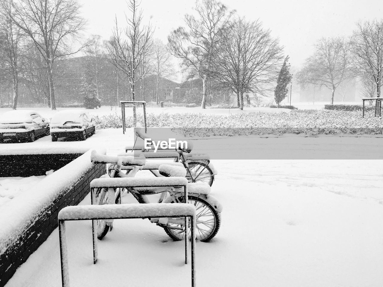 snow, winter, cold temperature, tree, bare tree, plant, nature, day, no people, field, covering, frozen, park, empty, tranquility, land, tranquil scene, absence, outdoors, snowing, park bench