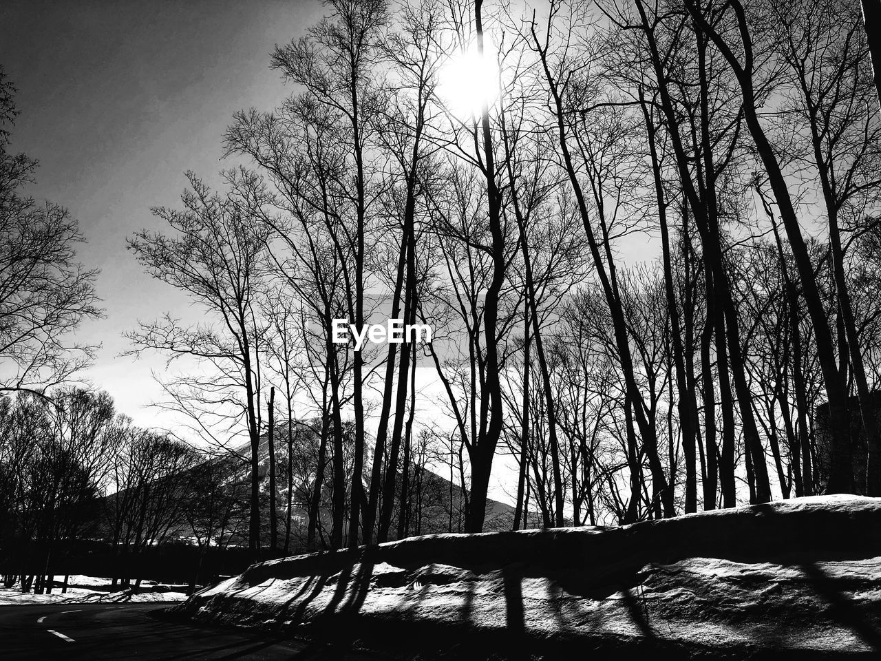 tree, bare tree, plant, sky, snow, winter, cold temperature, nature, beauty in nature, tranquility, sunlight, silhouette, tranquil scene, land, scenics - nature, no people, day, branch, outdoors, snowcapped mountain