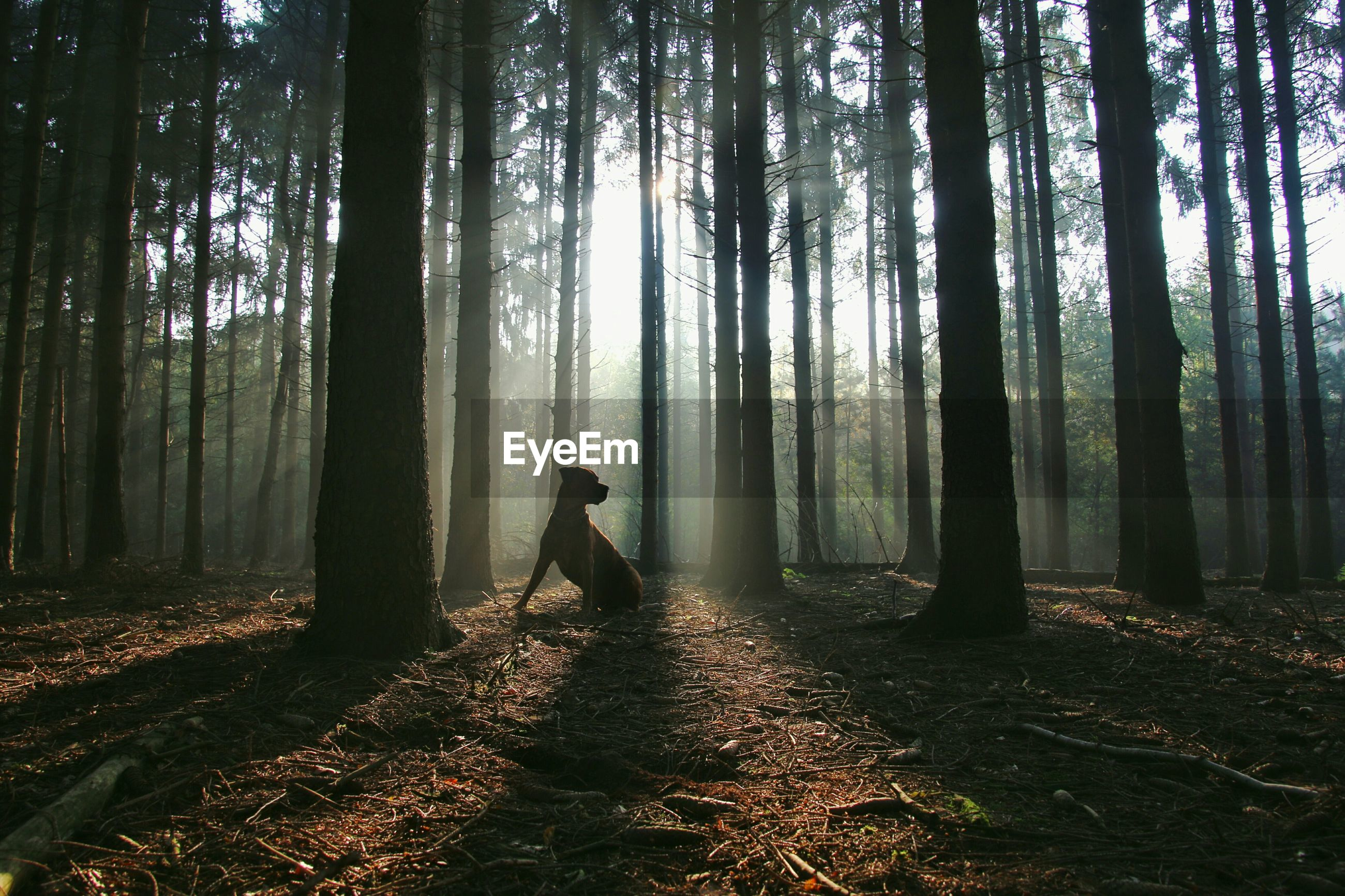 Low angle view of dog in forest