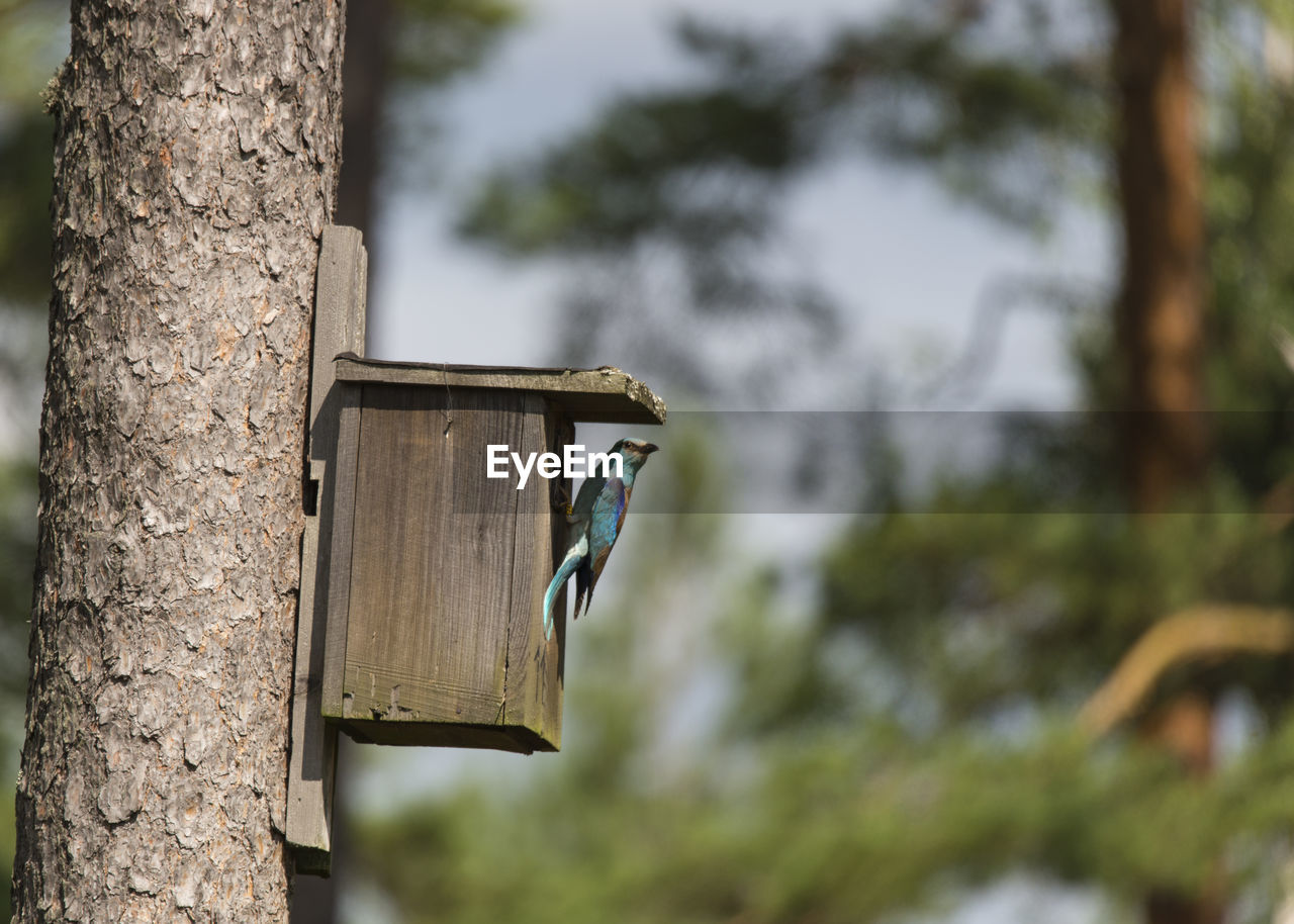 Roller On Birdhouse Attached To Tree