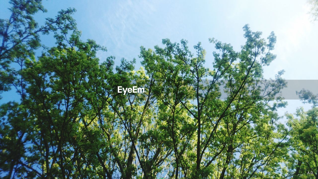 nature, tree, growth, forest, environment, low angle view, sky, blue sky, beauty in nature, outdoors, no people, day