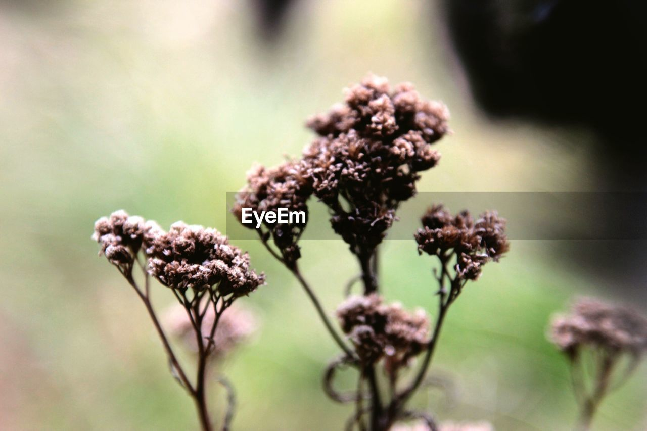 plant, nature, flower, growth, beauty in nature, fragility, no people, focus on foreground, day, close-up, outdoors, flower head, freshness