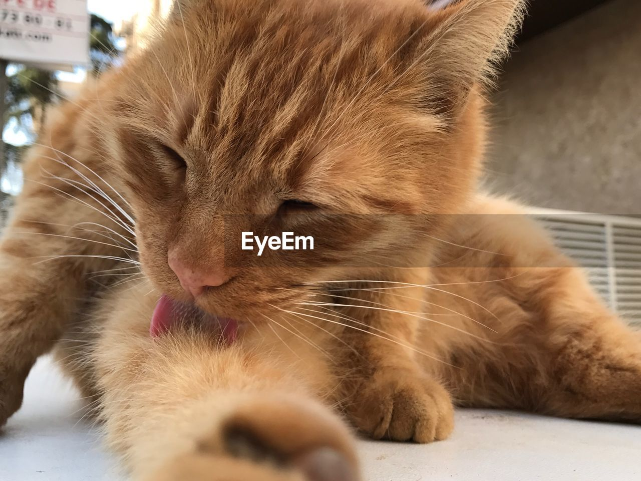 domestic cat, animal themes, feline, pets, domestic animals, mammal, one animal, whisker, indoors, close-up, no people, day
