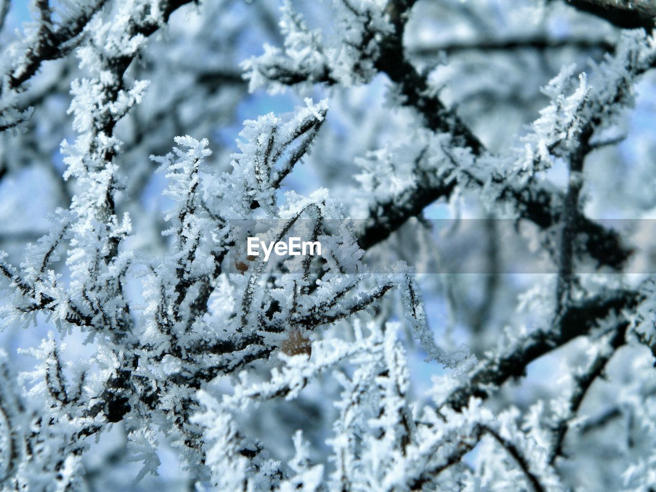 cold temperature, winter, snow, frozen, ice, no people, close-up, beauty in nature, nature, plant, backgrounds, full frame, day, white color, selective focus, tranquility, frost, branch, focus on foreground, outdoors, extreme weather, blizzard, coniferous tree, fir tree