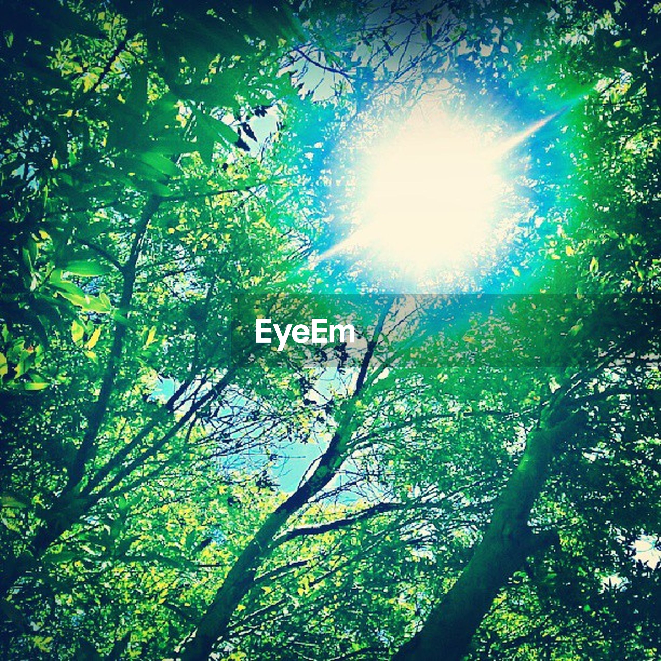tree, low angle view, sun, growth, branch, sunbeam, sunlight, lens flare, nature, tranquility, beauty in nature, green color, forest, sunny, day, sky, leaf, scenics, bright, outdoors