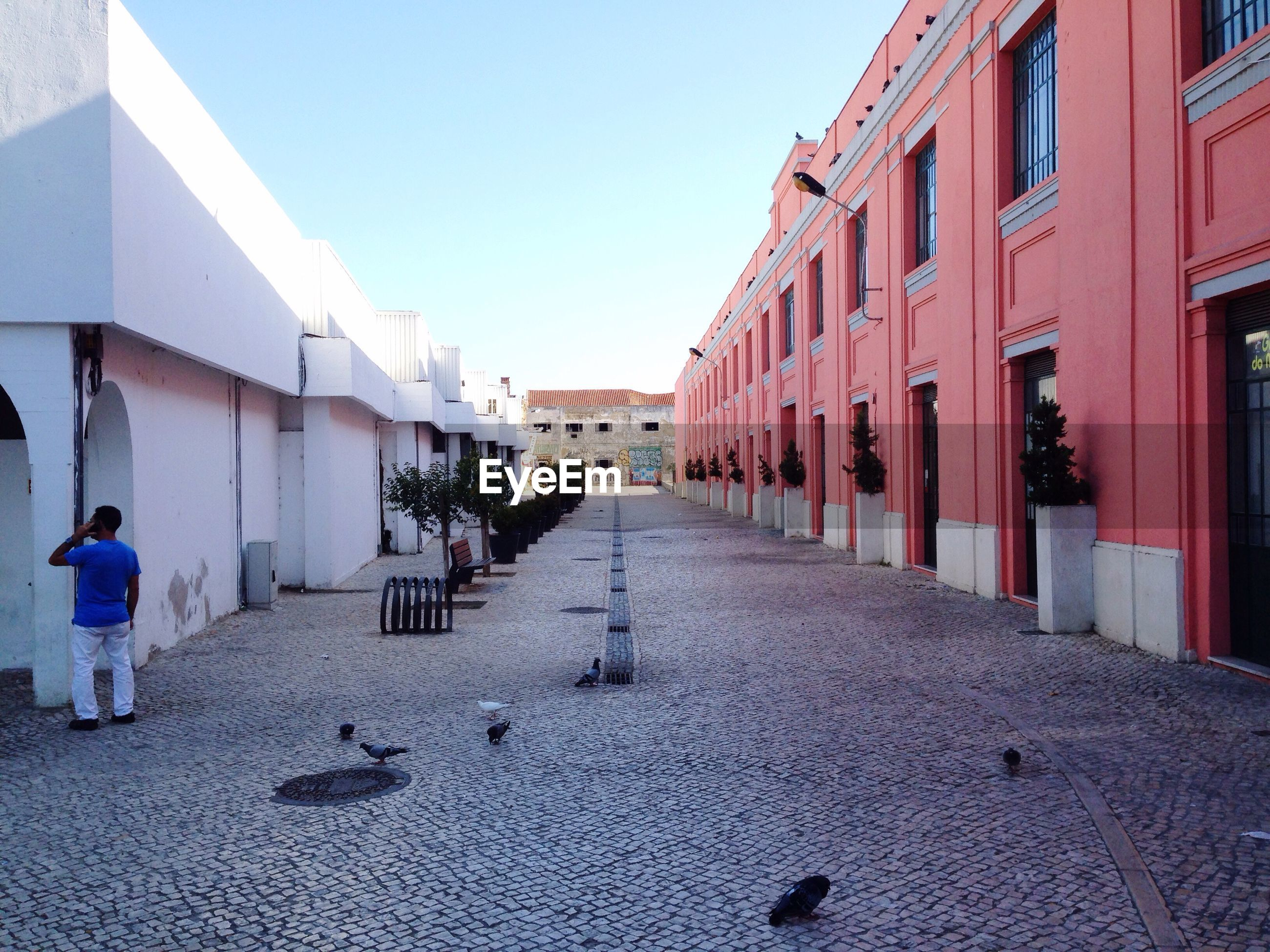 Pigeons on cobbled street amidst buildings