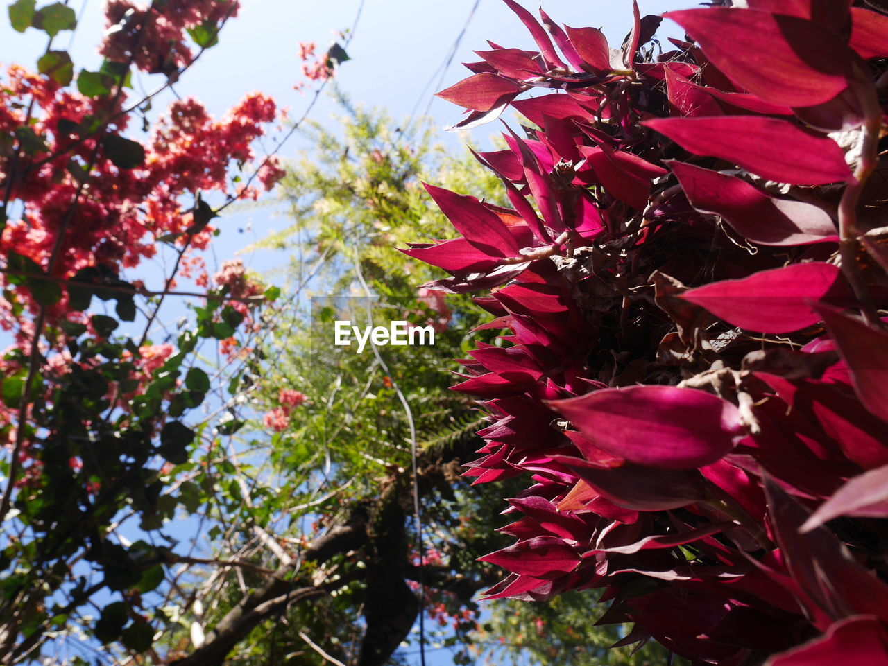 growth, flower, nature, beauty in nature, fragility, plant, no people, freshness, tree, day, outdoors, petal, blossom, red, branch, springtime, leaf, low angle view, close-up, blooming, flower head, sky