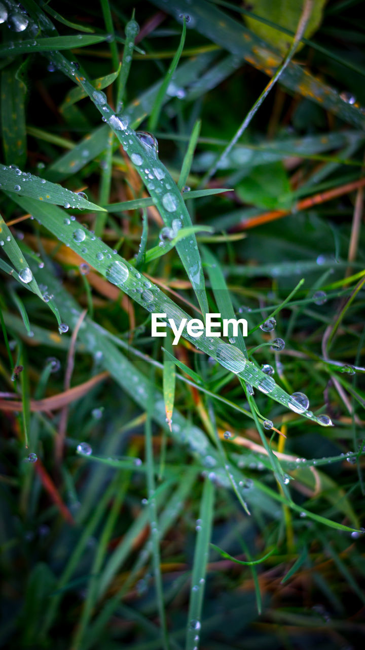 green color, nature, grass, growth, plant, drop, no people, full frame, beauty in nature, outdoors, day, close-up, backgrounds, water, freshness, needle, fragility