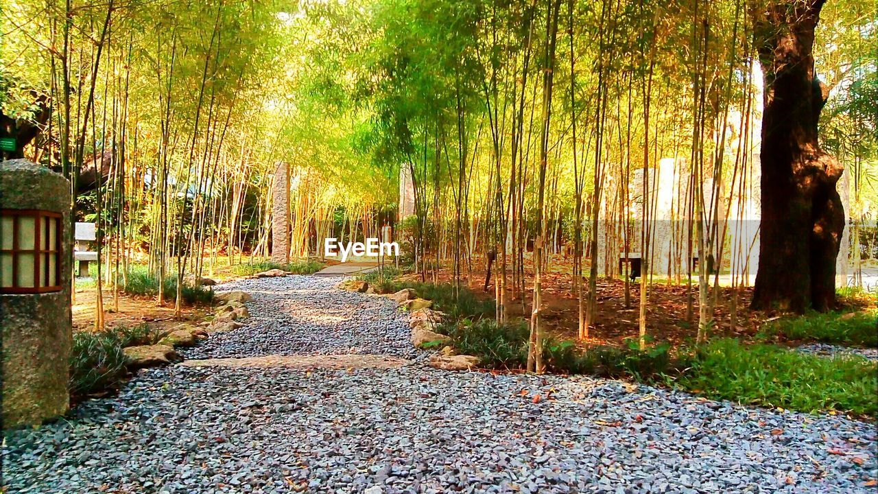 VIEW OF BAMBOO TREES