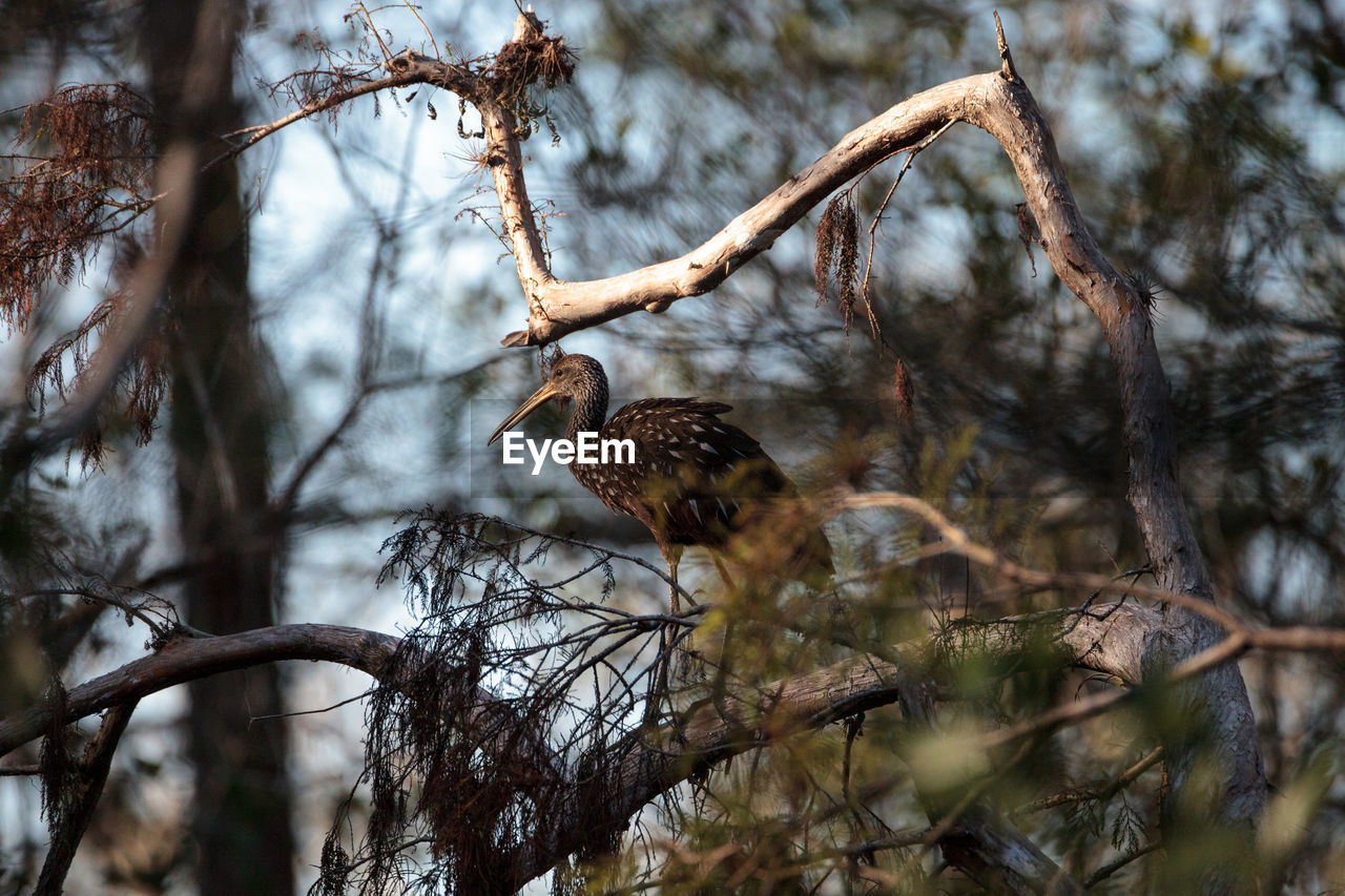 animals in the wild, tree, vertebrate, animal wildlife, animal themes, animal, branch, bird, one animal, plant, perching, nature, no people, focus on foreground, day, selective focus, bare tree, outdoors, low angle view, beauty in nature