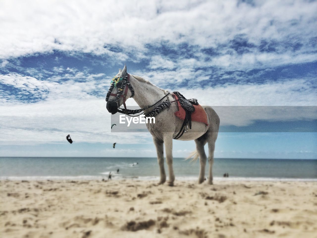 Horse standing on calm beach against clouds