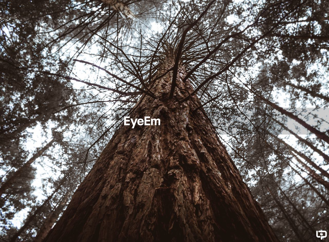 tree, tree trunk, low angle view, nature, day, outdoors, no people, branch, beauty in nature, sky, close-up