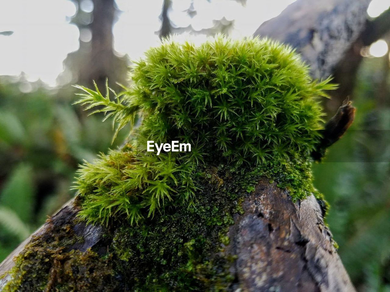 growth, green color, nature, close-up, focus on foreground, no people, day, plant, outdoors, spiked, beauty in nature, cactus, tree, freshness