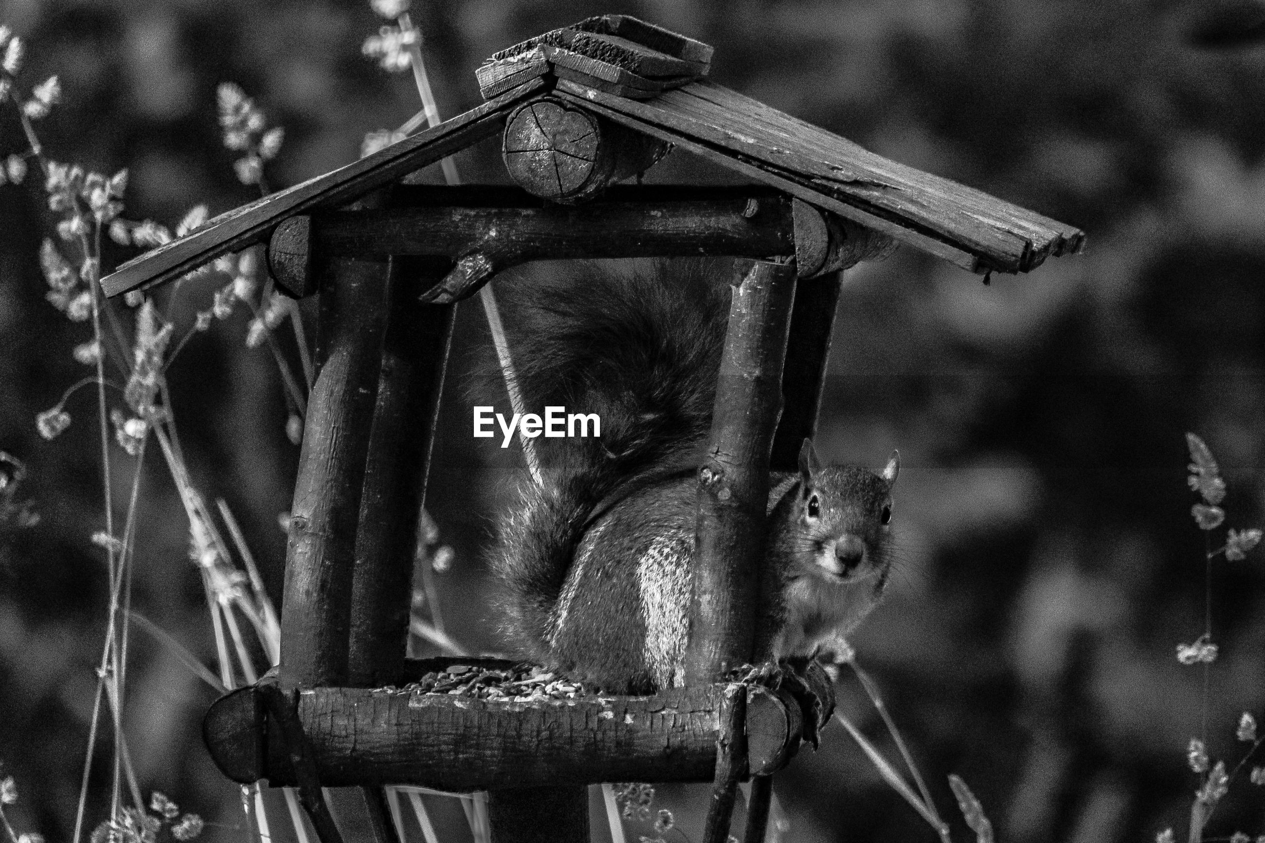 mammal, animal themes, focus on foreground, animal, animal wildlife, no people, one animal, vertebrate, day, primate, nature, monkey, animals in the wild, outdoors, hanging, wood - material, plant, tree, close-up, sitting
