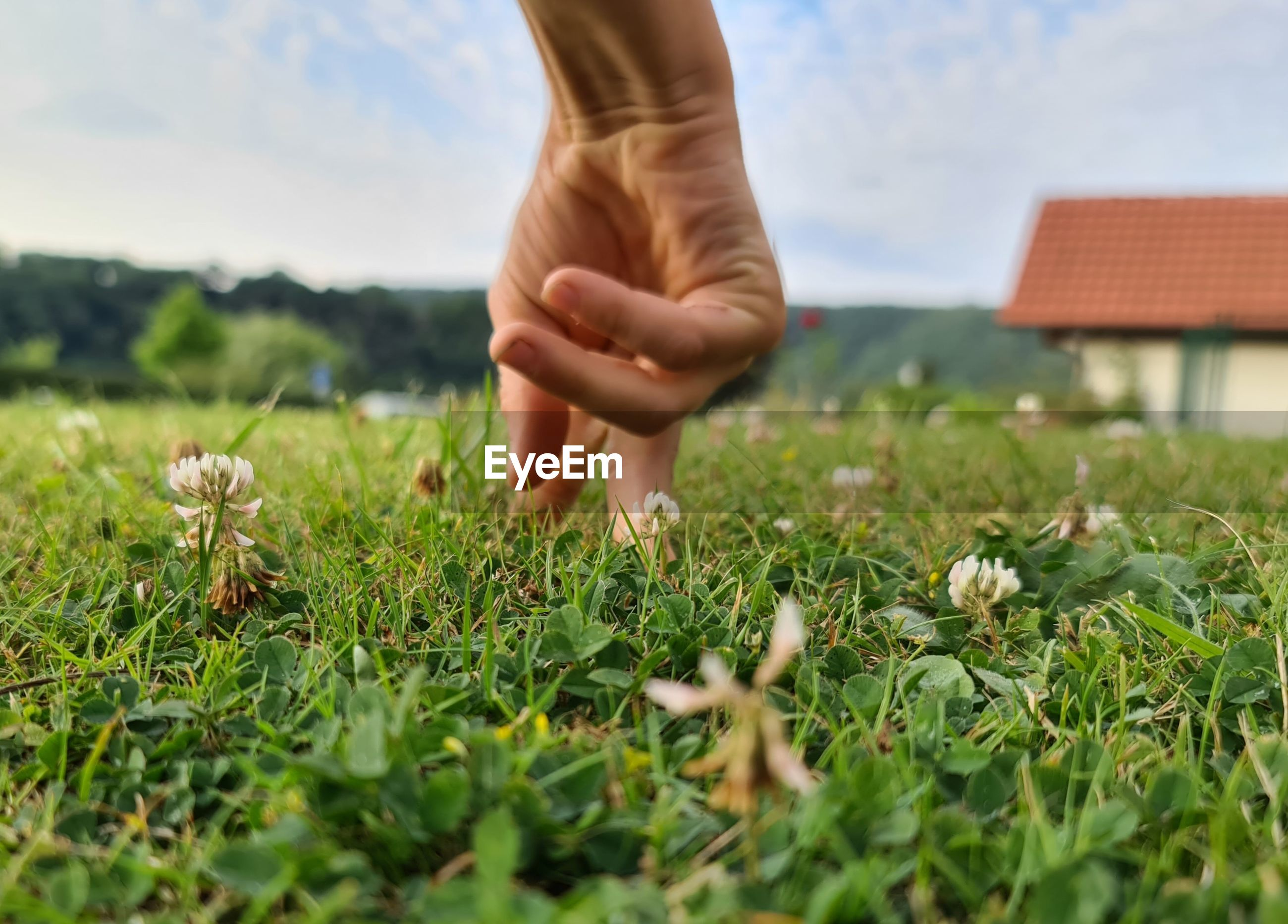 CLOSE-UP OF PERSON HAND ON GRASS