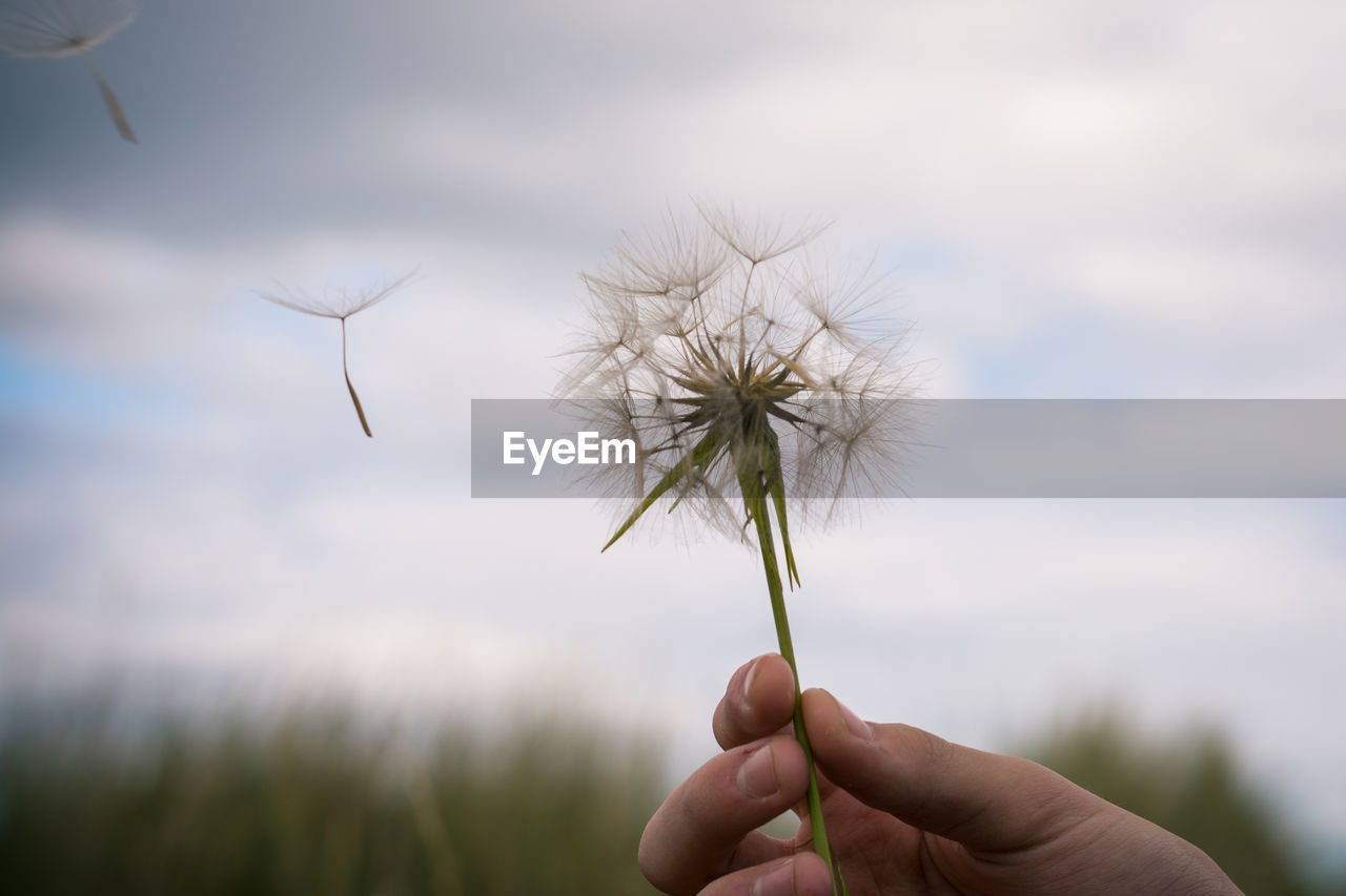 Cropped Image Of Hand Holding Dandelion Against Sky