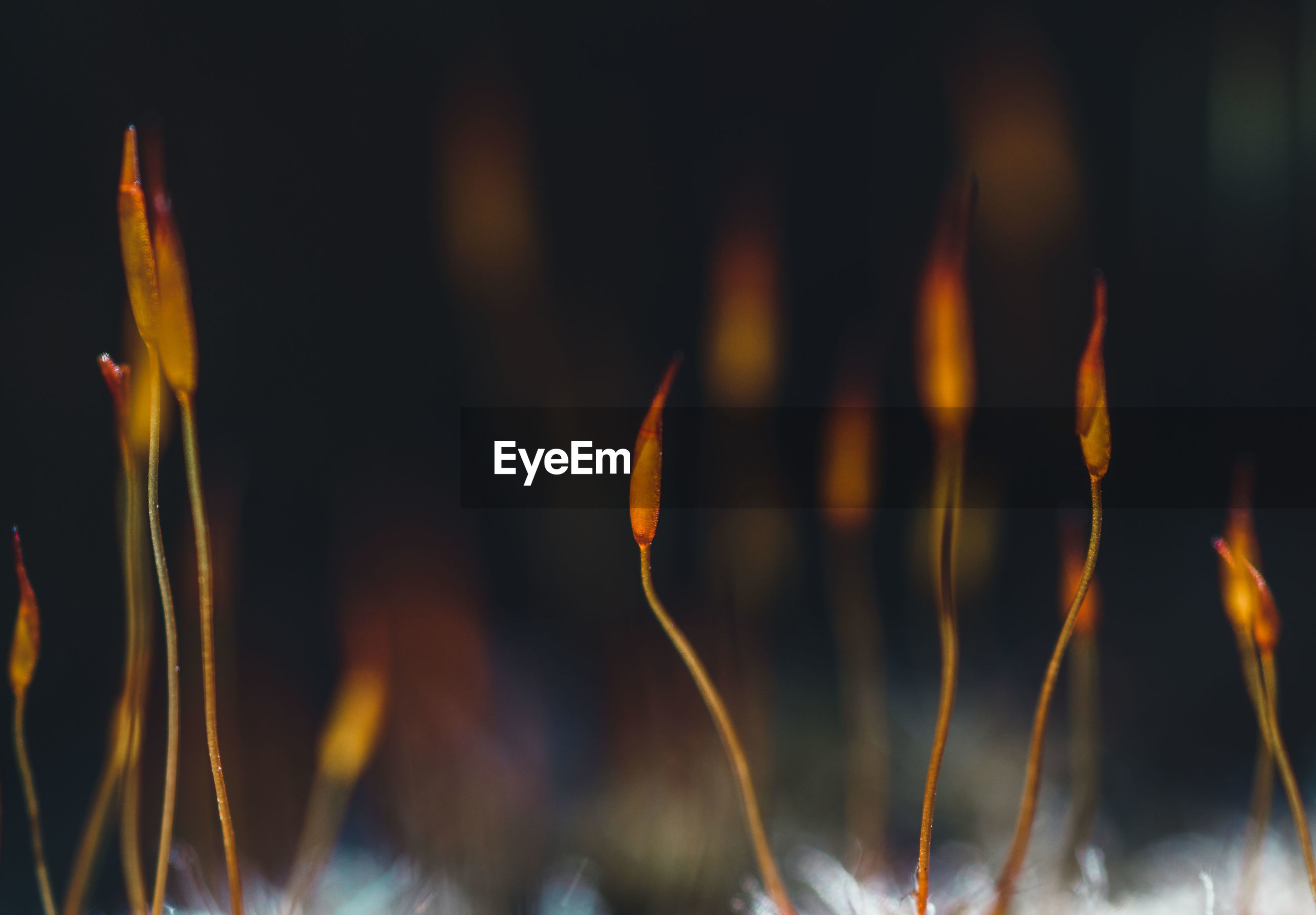 Close-up of fire against blurred background