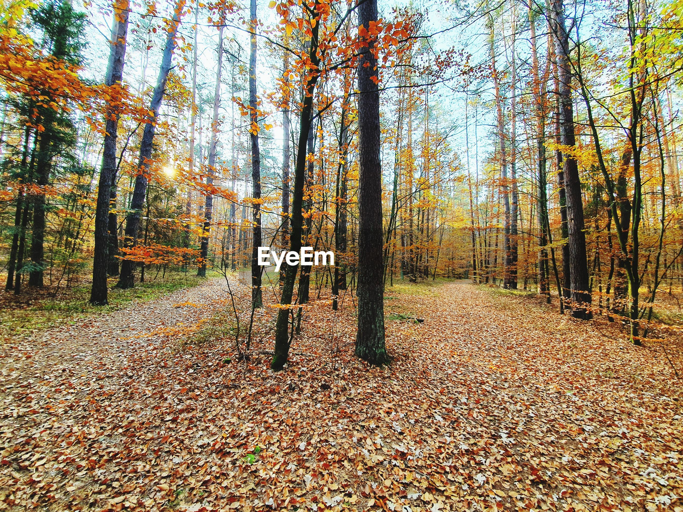 View of trees in forest during autumn