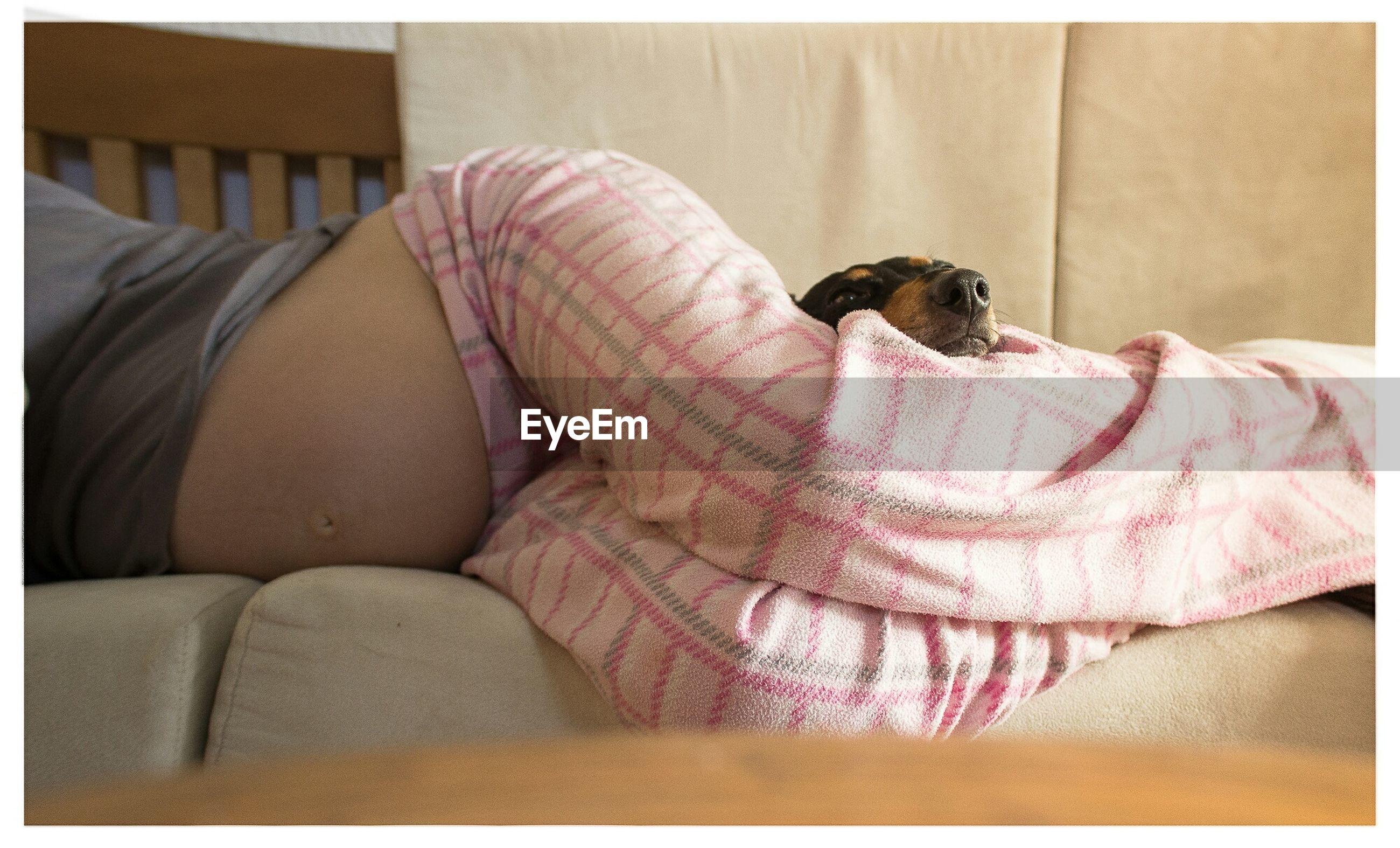 Dog and pregnant woman sleeping on sofa