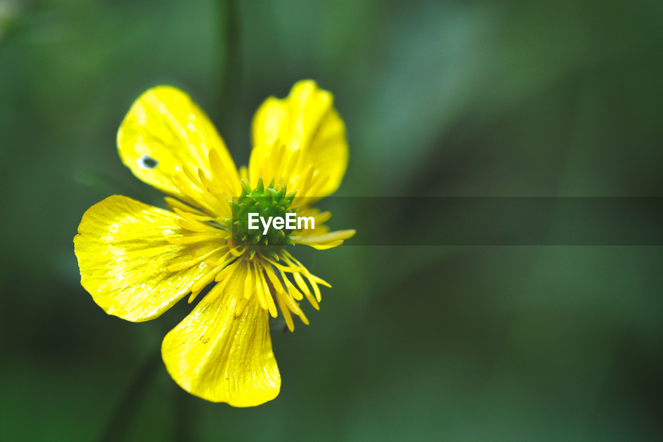 CLOSE-UP OF YELLOW FLOWER ON PLANT
