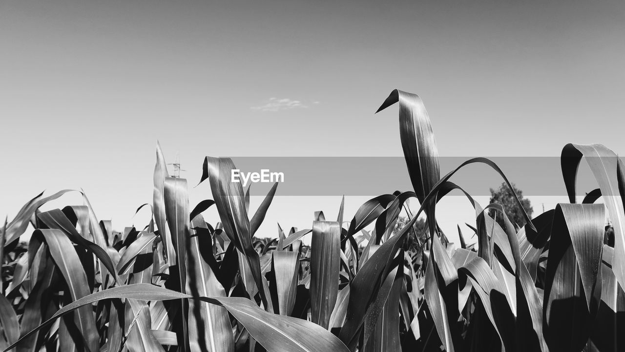 VIEW OF PLANTS AGAINST SKY