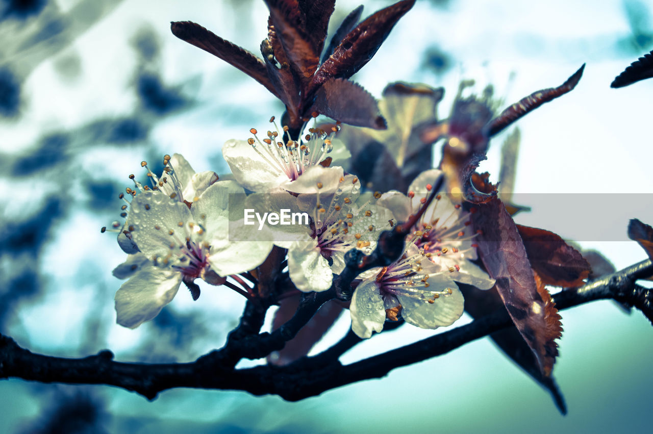 flower, fragility, growth, nature, beauty in nature, close-up, no people, tree, twig, branch, day, petal, outdoors, springtime, flower head, freshness